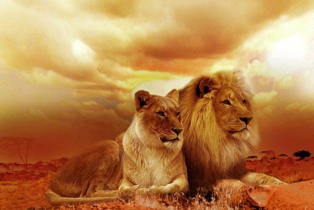 Privilégier les destinations africaines pour vivre pleinement un safari